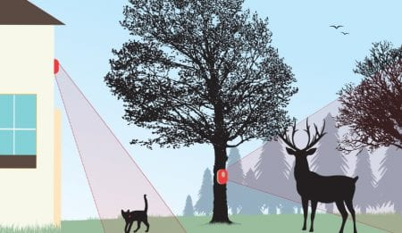 monitoring-wildlife