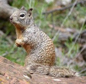 Squirrel spies
